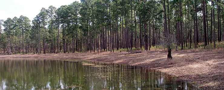 A view of Ditch Pond on Conecuh National Forest