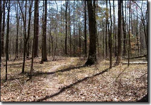 the history of tuskegee national forest It encompasses 614 square milesthe county seat is tuskegee tuskegee national forest is located in macon county history of alabama and.
