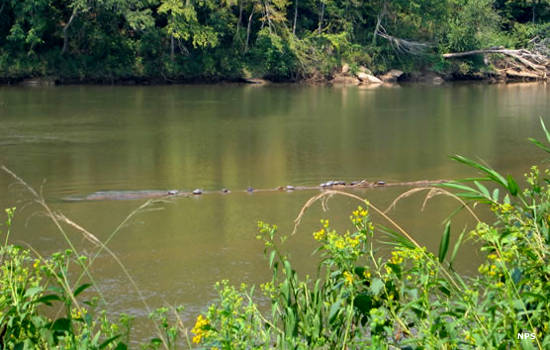 Along the Tallapoosa River at Horseshoe Bend National Military Park