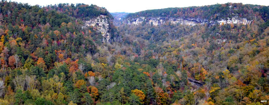 Looking out over the canyon and forest of Little River Canyon National Preserve