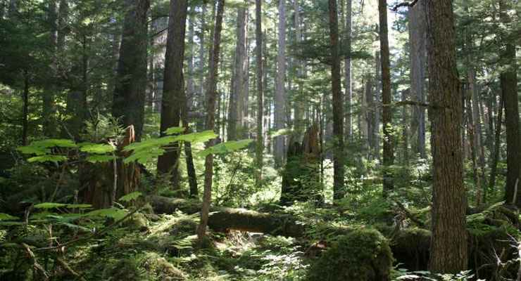 Tongass National Forest in the area of Juneau