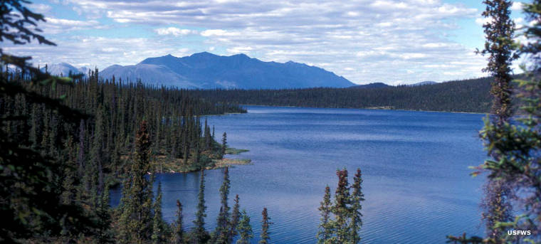 Blackfish Lake, Mollie Beattie Wilderness, Alaska