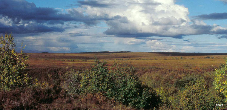 Flatlands at Selawik National Wildlife Refuge