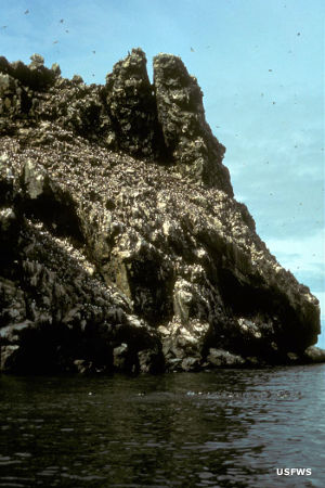 Bird Rock, Cape Newenham, Togiak National Wildlife Refuge