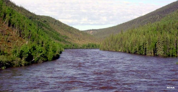 A view of the Fortymile River