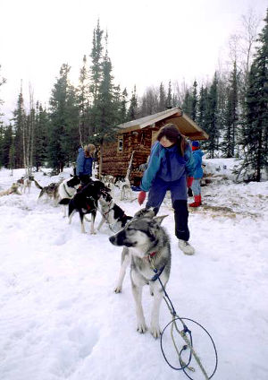 Dog mushers in the White Mountains National Recreation Area