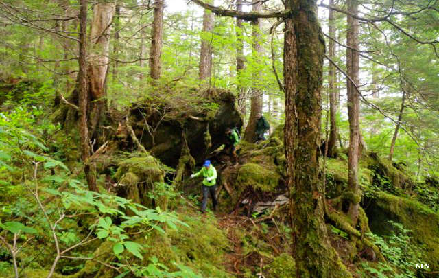 In the rainforest of South Baranof Wilderness