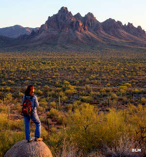 A visitor looking across the desert at Ironwood Forest National Monument
