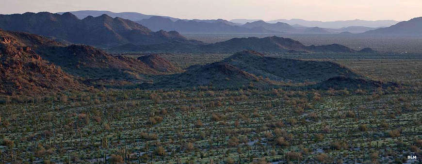 Looking north across the bajadas to the North Maricopa Mountains Wilderness