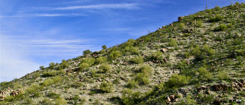 Looking at the vegetation lined up on a typical slope in Rawhide Mountains Wilderness