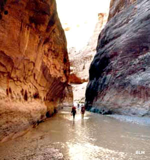 Hikers in the stream at the bottom of Paria Canyon