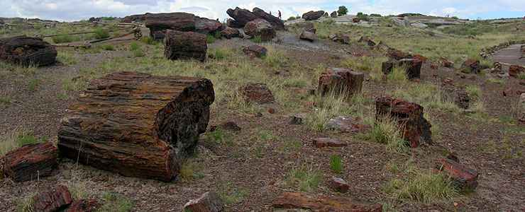 Big Logs, Petrified Forest National Park