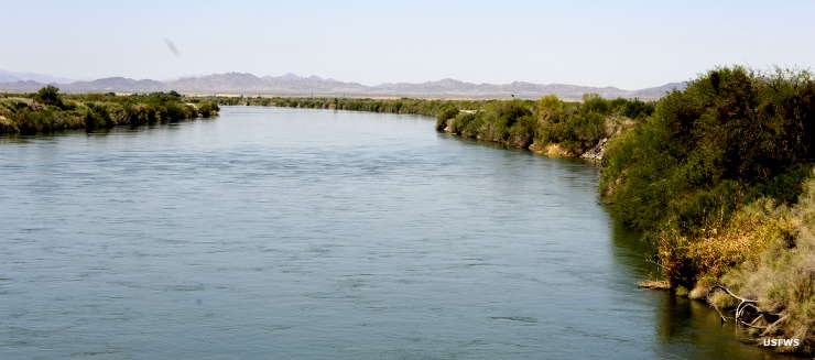 The Colorado River at Cibola National Wildlife Refuge