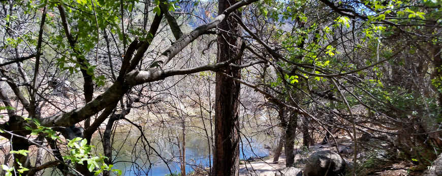 A view of Oak Creek through the trees, Coconino National Forest