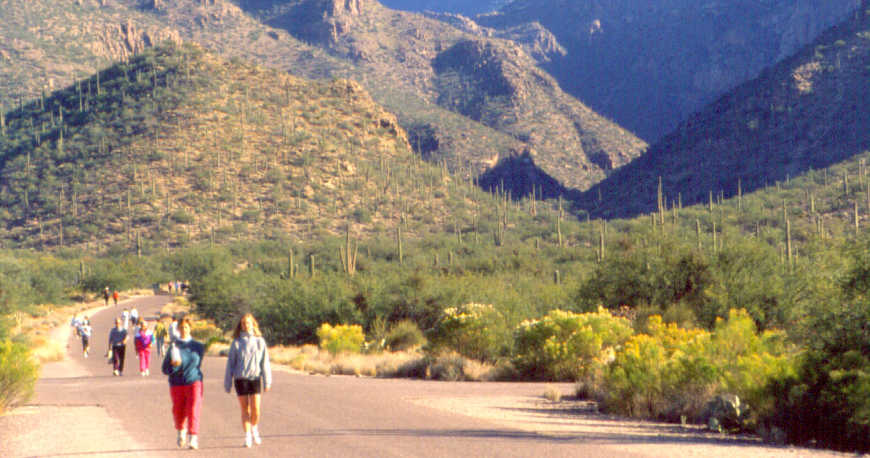 Coronado National Forest, Morning hikers in Sabino Canyon