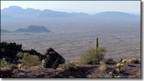 Organ Pipe Cactus Wilderness