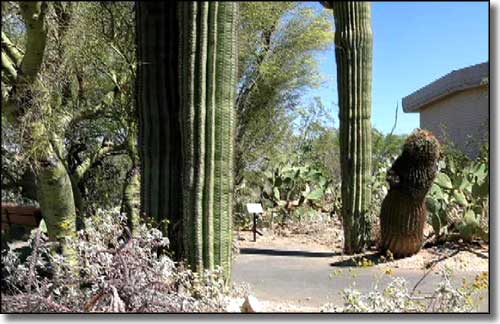 The cactus garden at Saguaro National Park Visitor Center
