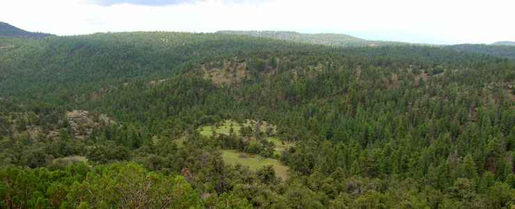 Apache-Sitgreaves National Forest along the Coronado Trail Scenic Byway