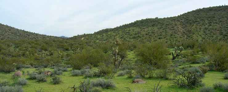 Typical Sonoran desert scenery along the southern part of the Joshua Forest Scenic Byway