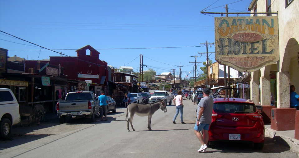 Resident burros in Oatman, along the Historic Route 66 Back Country Byway