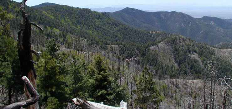 A mountain view in Chiricahua Wilderness