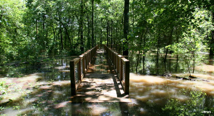 A flooded boardwalk at Dale Bumpers White River National Wildlife Refuge