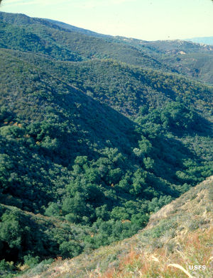 In the mountains of Agua Tibia Wilderness
