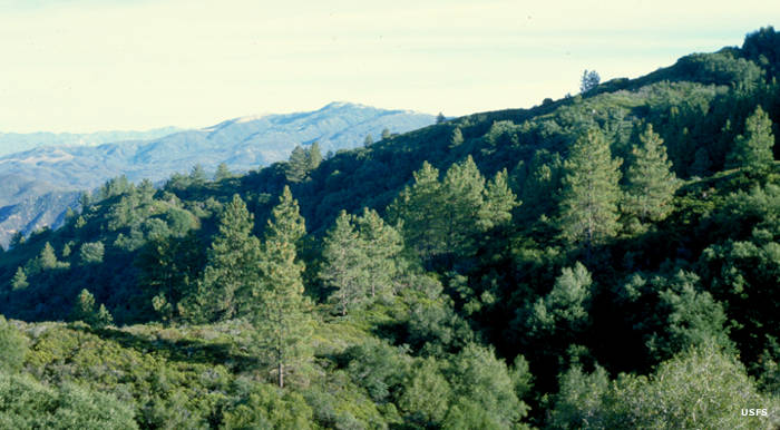 A view in Agua Tibia Wilderness