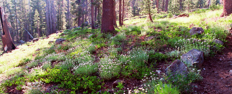Typical summer scene on Caribou Wilderness
