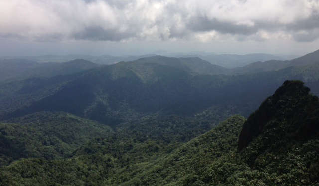 A view of the forest from the top of El Yunque Peak