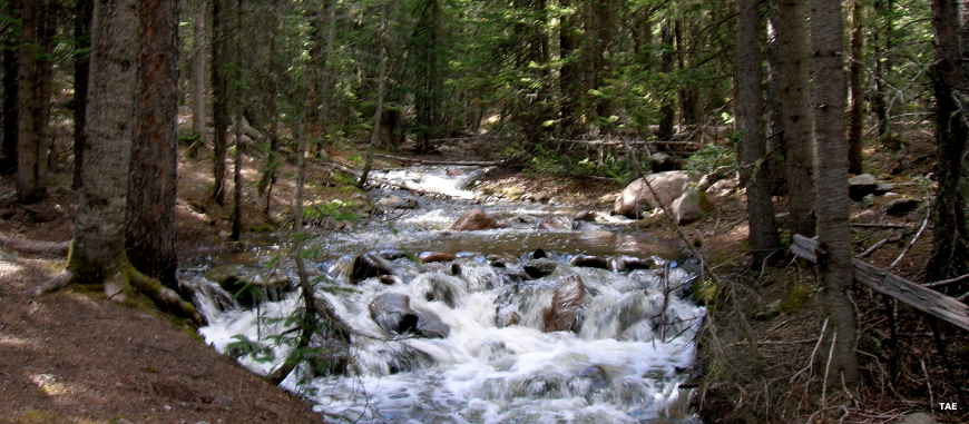 Typical mountain stream on San Isabel National Forest