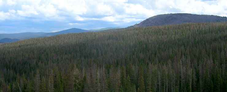 A typical view in Comanche Peak Wilderness
