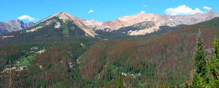 Looking at mountainsides of red-needled beetle-killed pine trees in Never Summer Wilderness