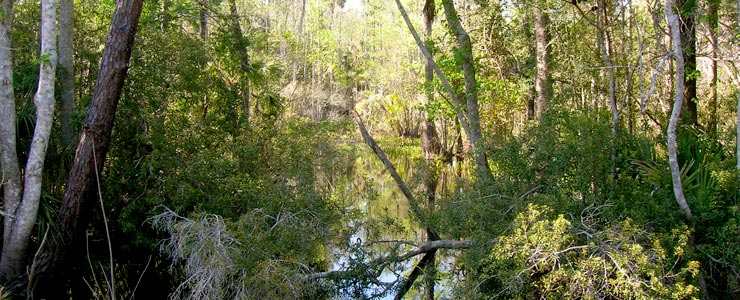 Ocala National Forest, Florida