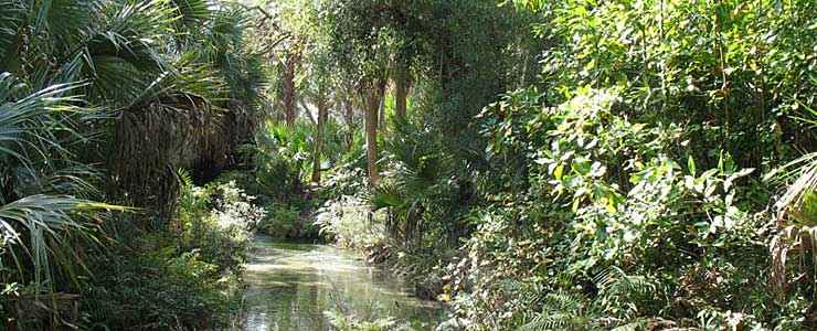The headwaters area of Juniper Springs