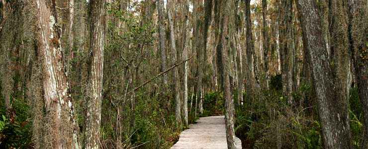Boardwalk to the swamp at Arthur R. Marshall Loxahatchee National Wildlife Refuge