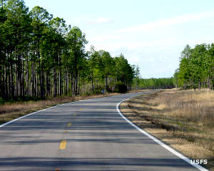Highway through Apalachicola National Forest