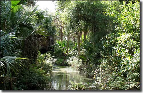 In the headwaters area of Juniper Springs, Ocala National Forest