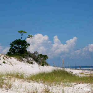 A view of sand dunes near Pensacola, FL