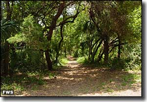 Trail on Atsena Otie Key