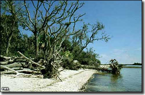 Snake Key, part of Cedar Keys National Wildlife Refuge