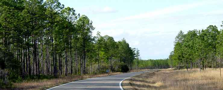 Along the Apalachee Savannas Scenic Byway