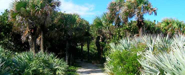A trail disappears into a jumble of palms and palmettos along the Indian River Lagoon Scenic Highway