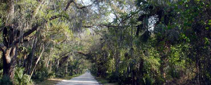 An example of the tree canopy on the Ormond Scenic Loop and Trail