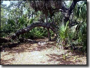 Along the nature trail through the interior of Caladesi Island
