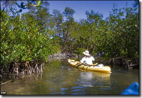 kayaking in the backwaters of curry hammock state park curry hammock state park   florida state parks  rh   thearmchairexplorer