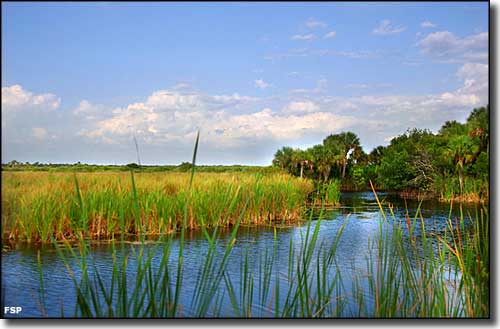 Wetlands and forest can be seen at Fakahatchee Strand Preserve State Park from the Tamiami Trail