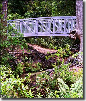 The footbridge across the Gold Head Branch ravine at Mike Roess Gold Head Branch State Park