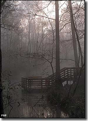 Early morning mists at Blue Hole Dock