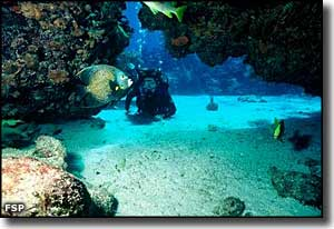 A scuba diver in the reef of John Pennekamp Coral Beach State Park